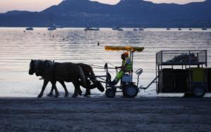 Le transport hippomobile, ici avec des chevaux de trait, permet d'éviter le rejet de gaz à effet de serre et préserve la biodiversité