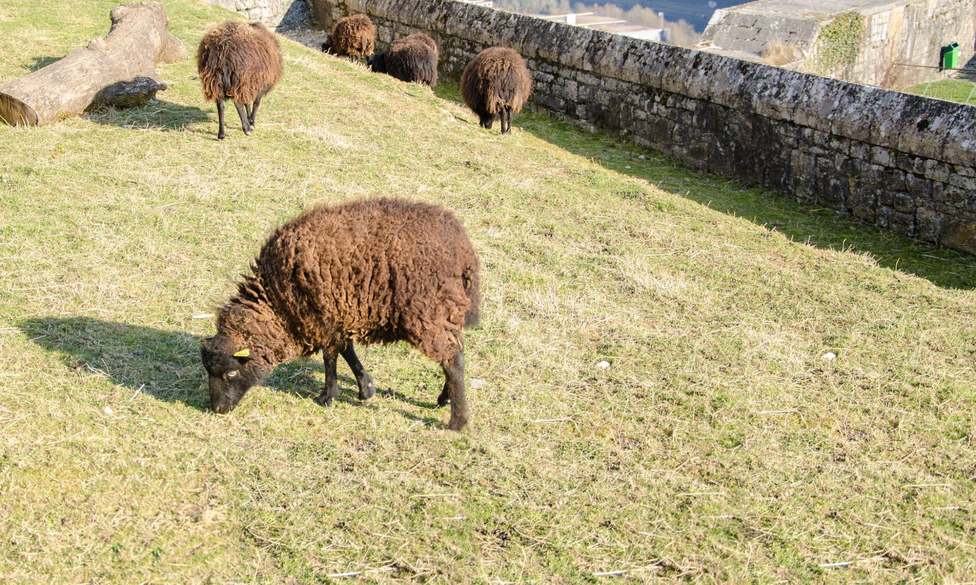 mouton en loire atlantique (entreprises)