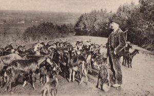 éco-pâturage avec des chèvres le long d'une route, photo ancienne en noir et blanc, berger moustachu avec veste et pantalon velour