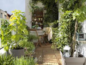 Un véritable jardin miniature sur balcon ; plantes en pot, grimpantes, nichoir ...