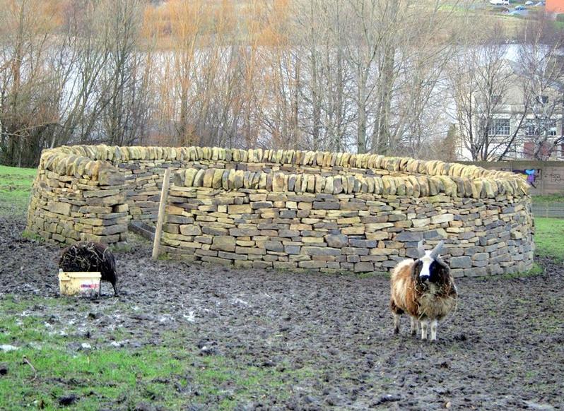 Vue d'un enclos circulaire en pierres, montées à sec, avec couronnement en pierres posées verticalement. Rarement utilisé en éco-pâturage !