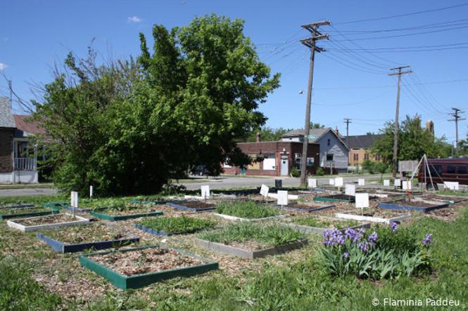 Exemple d'agriculture urbaine à Détroit : potager sous forme de parterre carrés, sur une ancienne parcelle de maison détruite
