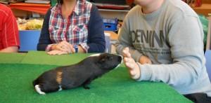 Vue d'un jeune homme dans un établissement médico-social tendant sa main à un hamster, qui vient la renifler.