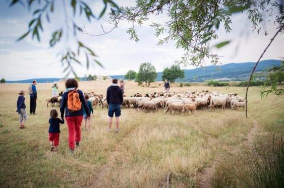 Des touristes découvrent un troupeau de moutons en moyenne montagne. Le réseau Accueil Paysan s'inscrit dans un mouvement de tourisme écologique