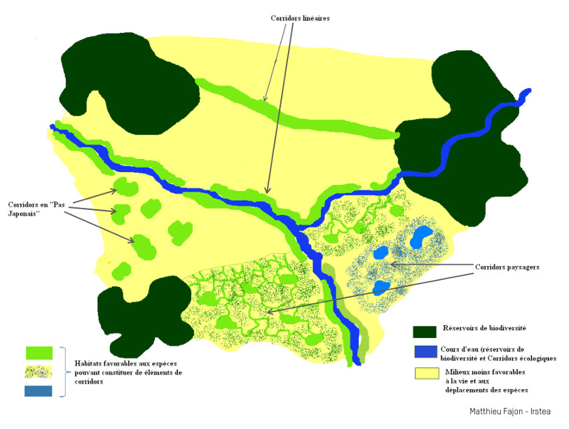 Schéma d'une trame verte et bleue : bois, haies, cours d'eau, mares sont connectés entres eux.