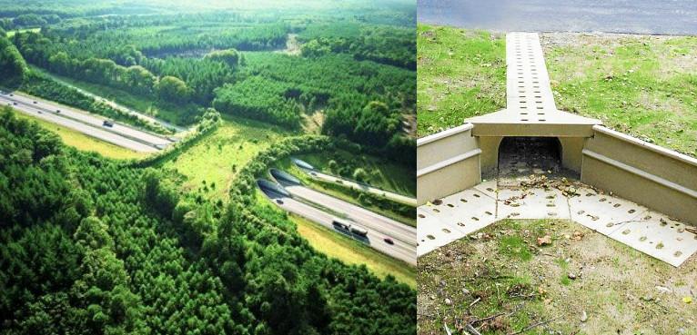 Vue aérienne d'un passage à gibier recouvert de végétation, vue d'un petit passage souterrain pour les petits animaux. L'un comme l'autre participe de la trame verte et bleue