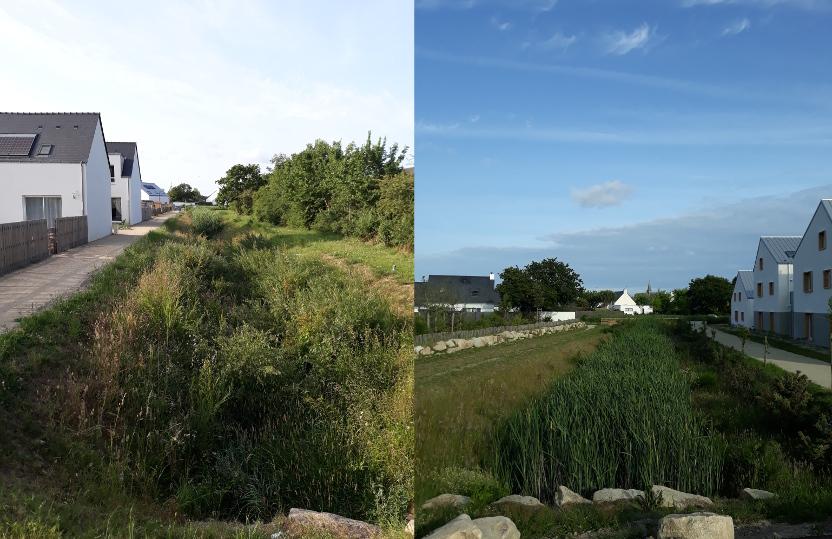 Vue de bassins d'orage, linéaires, remplis de végétation (roseaux, genêts ...). Commune de Guérande. Loire-Atlantique, département 44