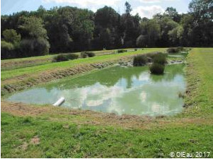 Assainissement écologique par lagunage, deux bassins successifs avec quelques plantes aquatiques