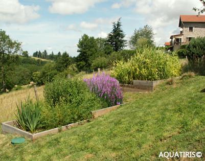 Assainissement écologique pour particulier : vue de bassins avec plantes aquatiques fleuris disposés en pente devant une maison