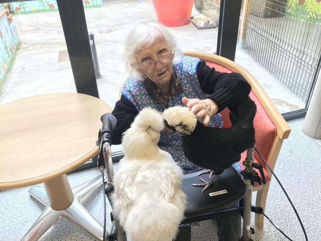 Une personne âgée dans un EHPAD caresse deux poules, animal adapté à la médiation animale