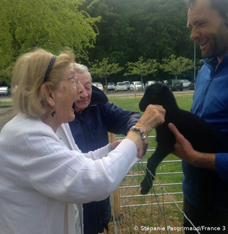 Médiation animale : des résidents d'un EHPAD à Carquefou (Loire-Atlantique) viennent caresser un agneau d'Ouessant. La personne en charge de l'écopâturage tient l'agneau dans ses mains.