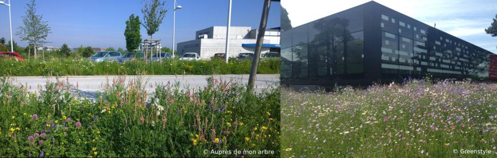 Les prairies fleuries constituent un excellent moyen de transformer ces espaces verts écologiques en entreprise