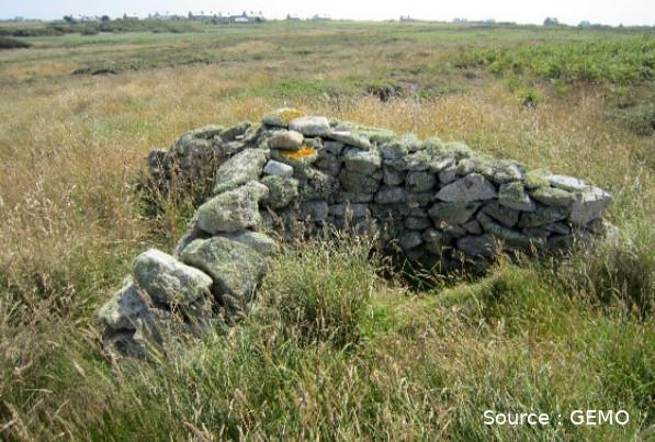L'abri traditionnel en pierres sèches d'Ouessant n'est pas ce qui se fait de mieux en matière de bien-être animal : il manque un toit !