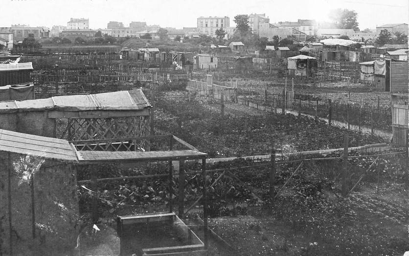 Les ancêtres de nos jardins partagés : cabanes et parcelles de potagers sur une carte postale en noir et blanc. Au fond, immeubles et maisons d'époque.