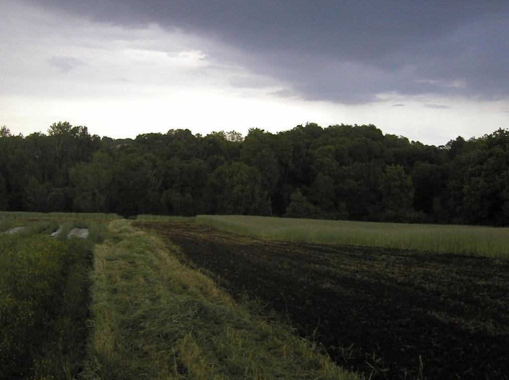 Terres agricoles sur la ferme d'Angreviers, sur la commune de Gorges dans le département de Loire-Atlantique (44). Plates-bandes et bois au fond.