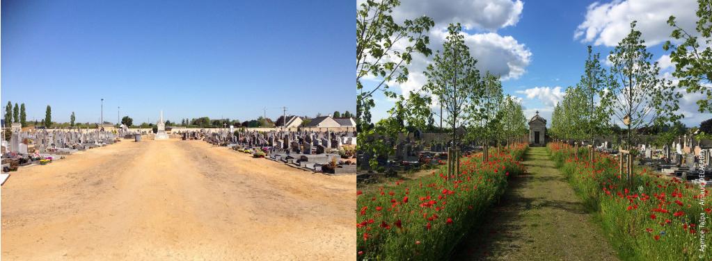 Écologie au cimetière en France : vues d'un même cimetière sans aucune herbe, sable au sol, puis le même cimetière avec arbres et prairie fleurie plantés dans l'allée
