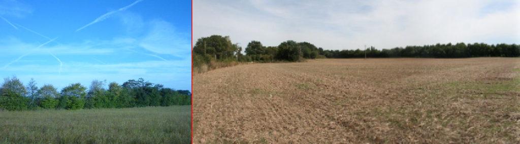 Terres agricoles à Mouzeil en Loire-Atlantique (44) : à gauche vue d'une haie champêtre, à droite, l'ensemble des terres avec bois au fond