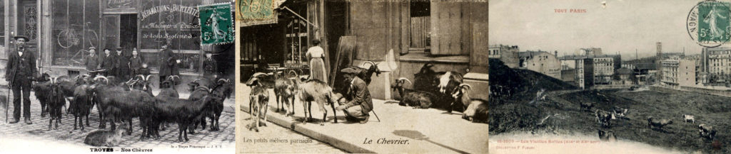 Animaux en ville et milieu urbain (de gauche à droite ; cartes postales anciennes) : chèvre devant une boutique à Troyes, chèvres sur un trottoir à Paris, champ avec des vaches au milieu d'immeubles à Paris