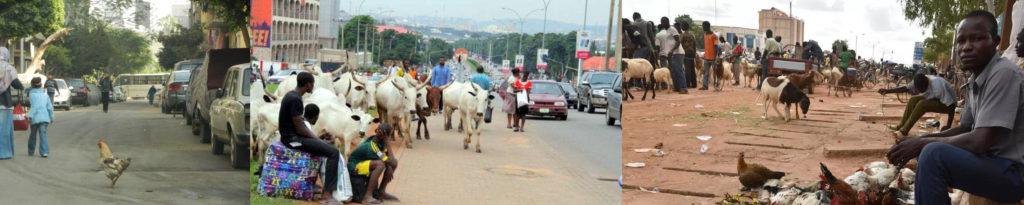 Agriculture urbaine dans des pays du sud (de gauche à droite) : poule dans la rue, vache sur une route, animaux vivants sur un marché