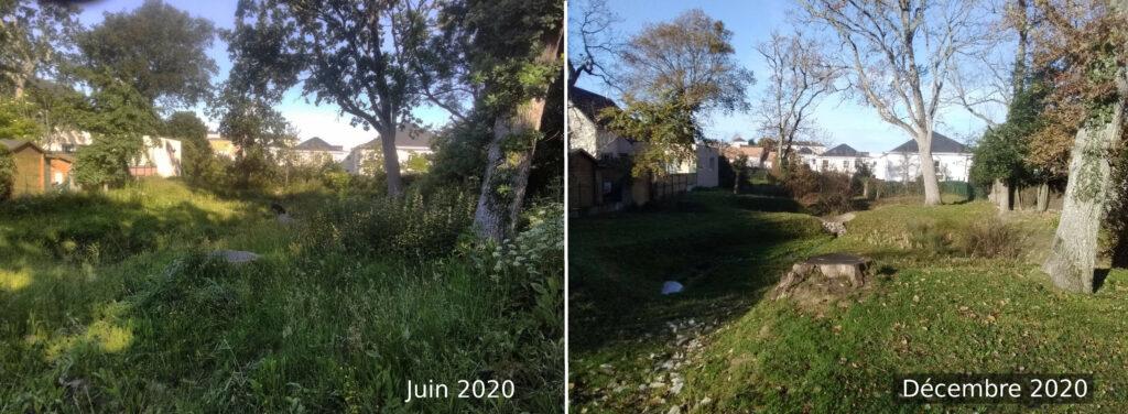 Métier de l'écopâturage : gestion de l'herbe. À gauche, photographie d'une parcelle très enherbée (juin 2020) et à droite, la même parcelle avec de l'herbe rase, 6 mois après (décembre 2020).