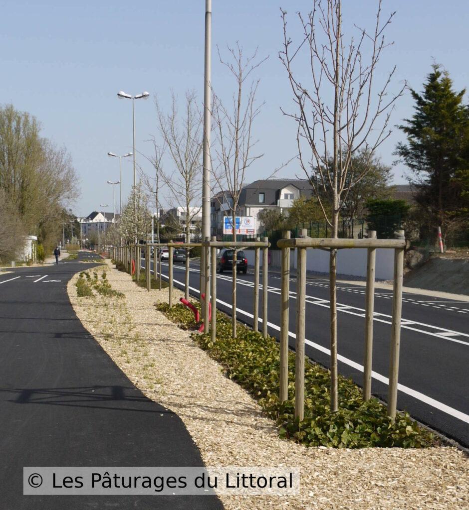 Exemple de travail d'un paysagiste écologique en Loire-Atlantique : photo d'une avenue à Pornichet, récemment réaménagée, plantation d'arbres, plantes couvre-sol et broyat de branches