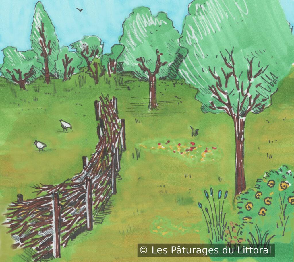 Dessin en couleurs d'une barrière de branches : deux rangées de piquets plantés en arc de cercle, rangées espacées d'un mètre, branches entassées entre ces piquets. Palissade de branches dans une prairie fleurie avec arbres et poules