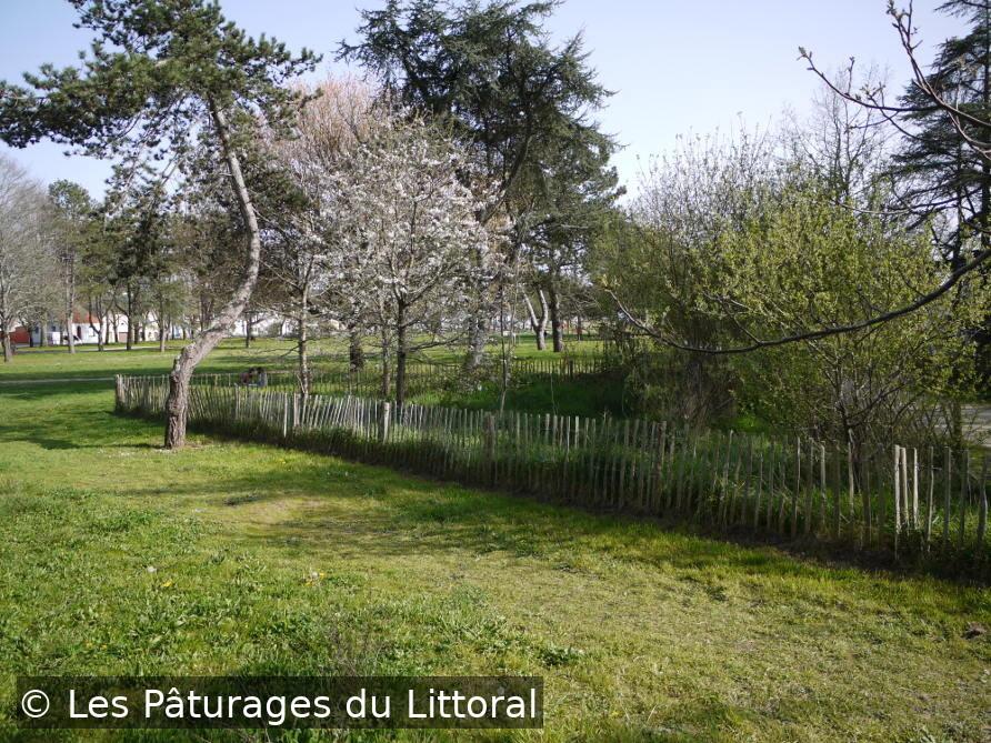 Aménagement paysagiste écologique en Loire-Atlantique (Saint-Nazaire) : zone avec de l'herbe haute entourée d'une barrière, dans un parc paysagé. Le reste du parc est tondu.