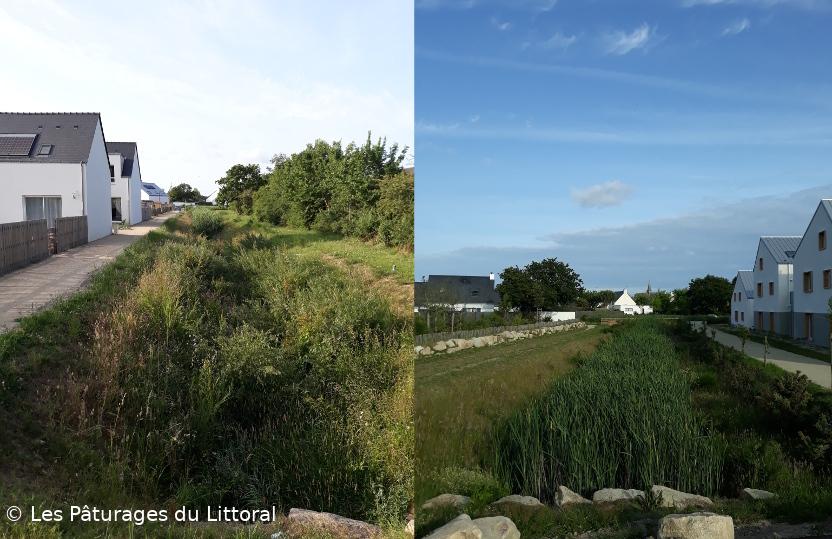 Photos de bassins d'orage : sorte de grands fossés, profonds, avec roseaux et plantes d'eau, chemins et maisons le long de ces bassins d'orage linéaires. Écoquartier de Guérande, Loire-Atlantique
